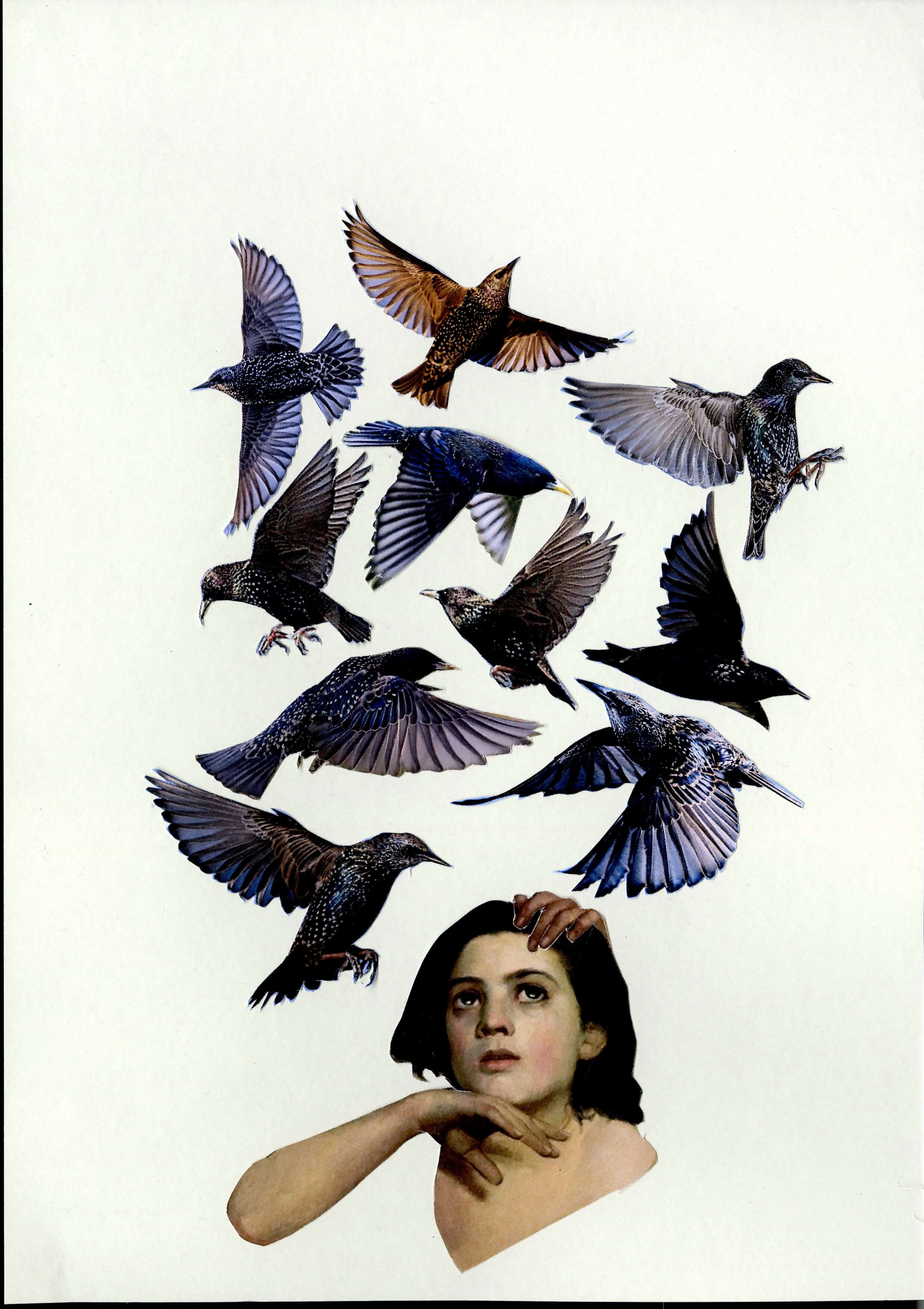 BIRDS COLLAGE by Iona Monks